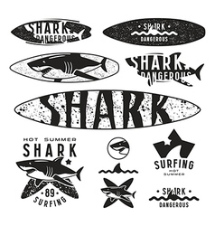 Graphic design with the image of shark vector image vector image