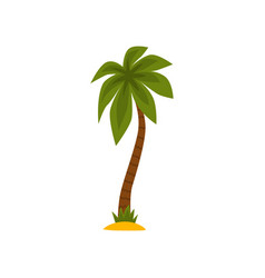 green palm tree on a white vector image