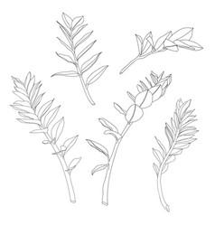 lline tropical zamioculcas leaves vector image
