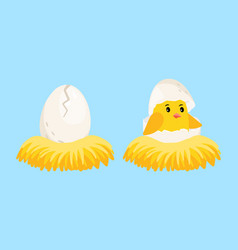 newborn chick cartoon egg and hatched chick with vector image