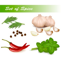 set with spice vector image vector image