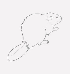 Beaver icon line element of vector