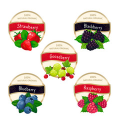 berry jam and marmalade labels fresh strawberry vector image