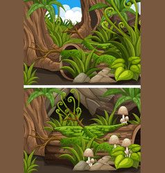 Forest scenes with mushrooms and ferns vector