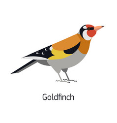 goldfinch isolated on white background adorable vector image