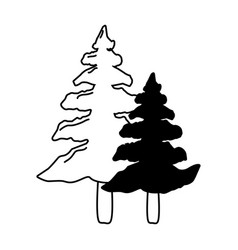pine trees forest vector image