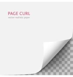 White paper with curled corner vector image