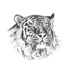 head of tiger vector image vector image