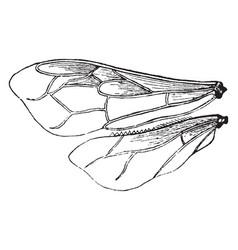 Bee wing vintage vector