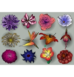 Colorful sketch of flowers set vector