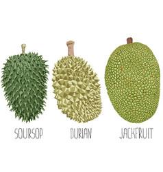 Fruit on white background vector