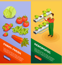 Hydroponic and aeroponic vertical banners vector