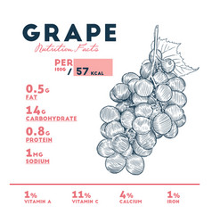 Nutrition facts of grape hand draw sketch vector