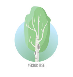 tree birch isolated on white vector image vector image