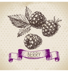 Raspberry Blackberry Hand drawn sketch berry vector image vector image