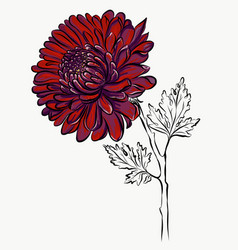lovely isolated big red flower grafical paint vector image vector image