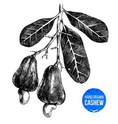 hand drawn cashew tree branch vector image