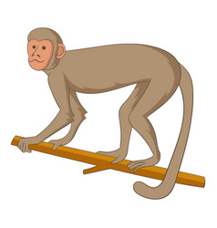 macaque icon cartoon style vector image