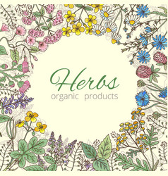 Medicinal botanical and healing beauty herbs from vector