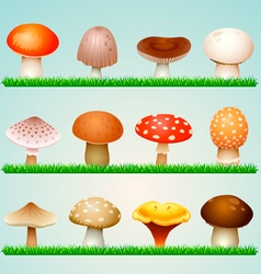 Mushrooms on grass vector