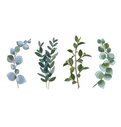 Set eucalyptus vector