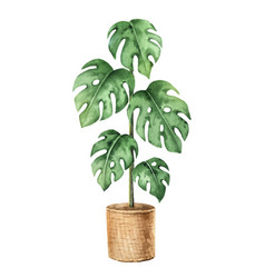 Watercolor clipart with a monstera in a vector