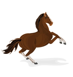Brown horse wild stallion isolated illus vector