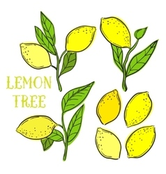 Elements with lemons and tree leafs vector