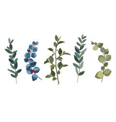 Eucalyptus leaves set vector