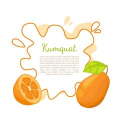 kumquat exotic juicy fruit citrus poster vector image