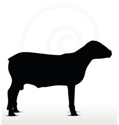 sheep silhouette with standing still pose vector image