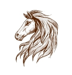 Sketch profile of arabian horse head vector