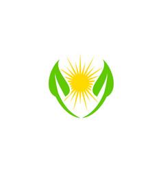 sun plant logo vector image
