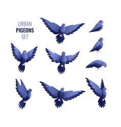 urban pigeons flat set vector image