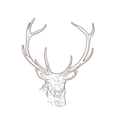 Drawing deer head vector