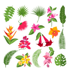 Exotic tropical flowers and leaves vector