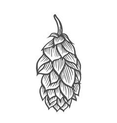 hop organic herb plant vector image