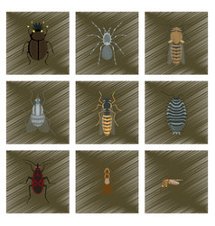 Assembly flat shading style insect honey wasp vector