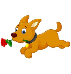 Cute cartoon dog running with rose vector image