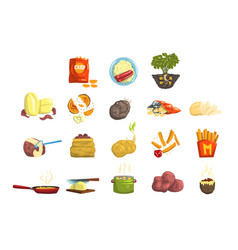 dishes of potatoes set raw and cooked potatoes vector image