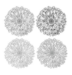flower with petals sketch on white background vector image