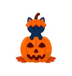 Kitty play hide and seek in a halloween pumpkin vector