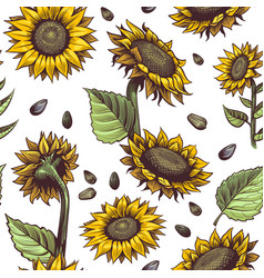sunflowers seamless pattern beautiful botanical vector image