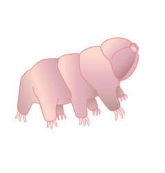 Tardigrades - full color picture vector