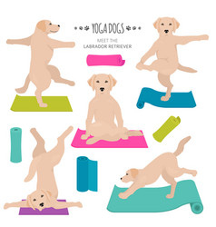 Yoga dogs poses and exercises labrador retriever vector