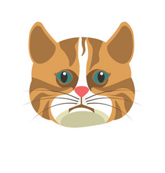 american shorthair brown white cat isolated on vector image vector image
