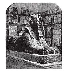 Androsphinx thothmes sphinx vintage engraving vector