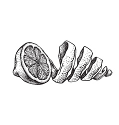 Hand draw of lemon vector image