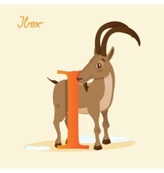 I for Ibex vector