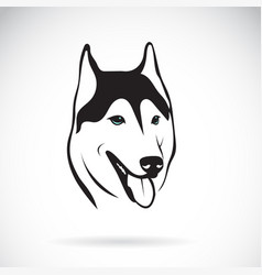 siberian husky dog head design on white vector image